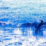 【ワーケーションで街おこし!】サーフィンしながらシゴトできる家を探しています。